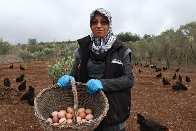 Tavuk kümesi İŞKUR desteğiyle çiftliğe dönüştü