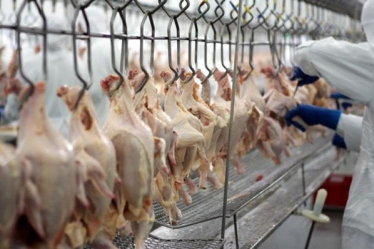Tavuk Eti Üretimi Ve Kesilen Tavuk Sayısı İse Yüzde 13,5 Azaldı