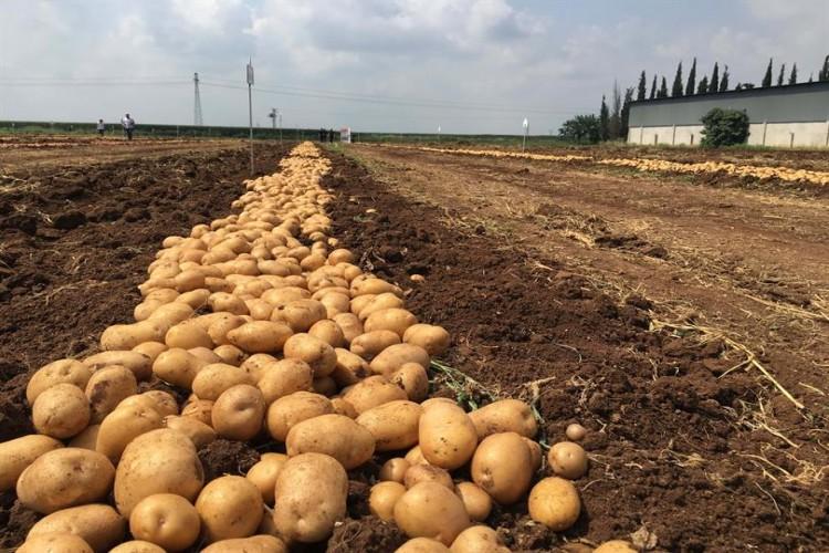 """Gürer: """"Patates Üreticisi Borçlarını Ödeyemiyor"""""""