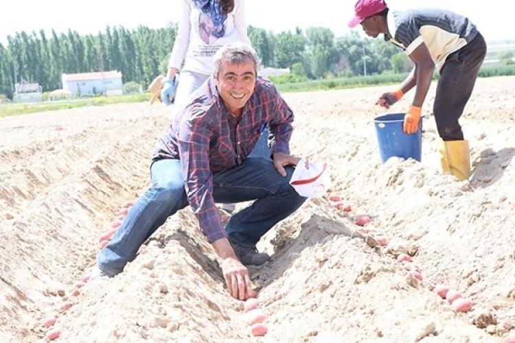 Kuraklığa Dayanıklı Yerli Patates Çeşidi Geliştirildi