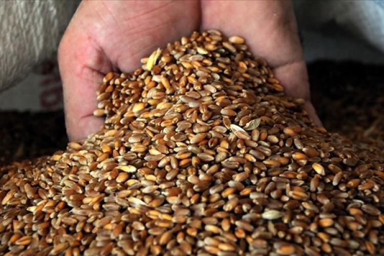 Buğday yatırımcısını üzdü