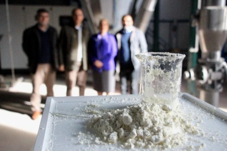 İlk Kez Üretildi! Buzağı Ölümleri Yerli Ağız Sütü Tozu İle Önlenecek
