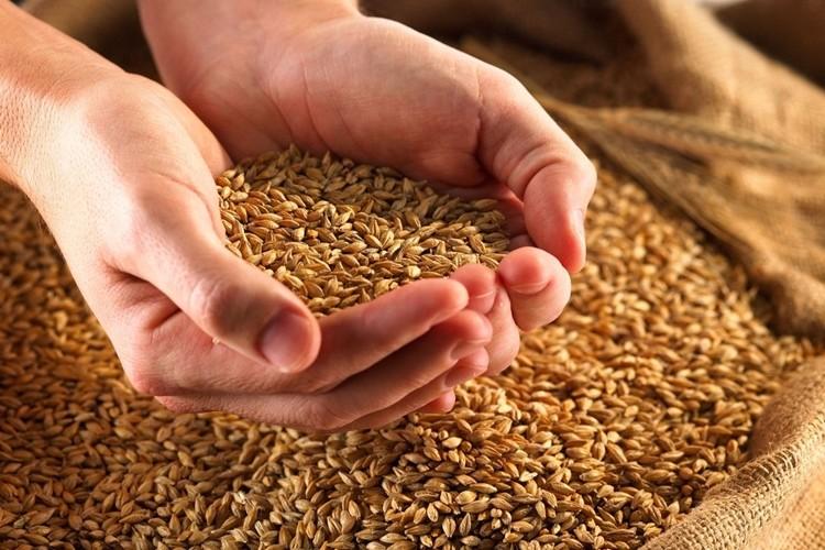 Bakanlık Açıkladı: Türkiye'nin Buğday Üretimi Kendi Kendine Yeterlidir