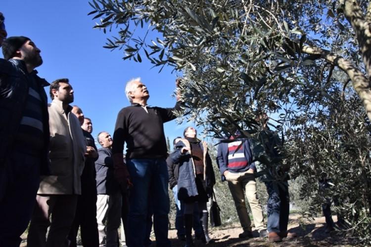 Antalya'da Meyve Ağaçlarında Budama Eğitim Seferberliği