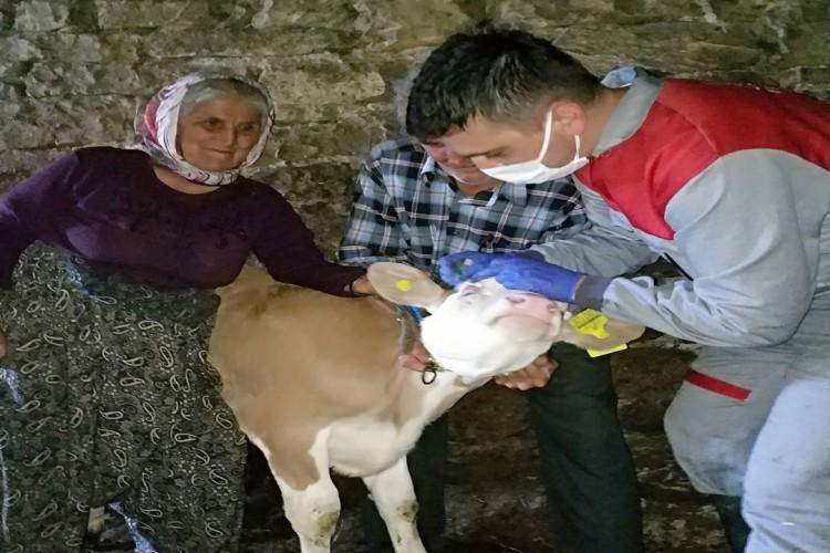 Bolu'da aşı çalışmaları aralıksız devam ediyor
