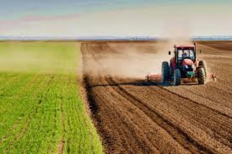 Bu ürünü eken çiftçi yaşadı! Alım garantisi geliyor