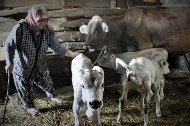 Yüzlerce Yıldır Hayvan Bakılan Köyde İlk Defa Böyle Bir Doğum Gerçekleşti