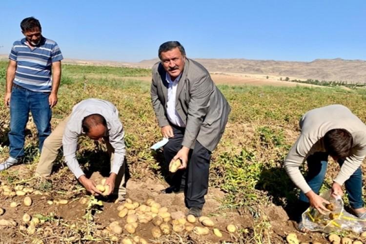 """Gürer: """"Patates Üreticisi  İktidarın Umurunda Değil"""""""