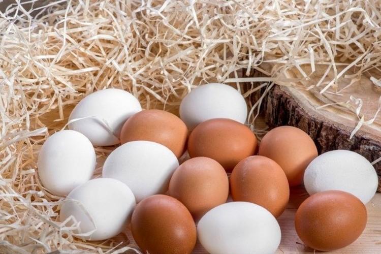 Entegre Organik Yumurta Tavukçuluğu Projesi Hibe Desteği Başladı
