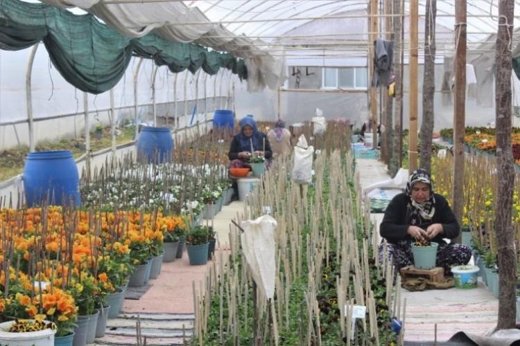 Bu Köyün Annelerinin Yetiştirdiği Çiçek Tohumları Para Basıyor, Dünyaya İhraç Oluyor