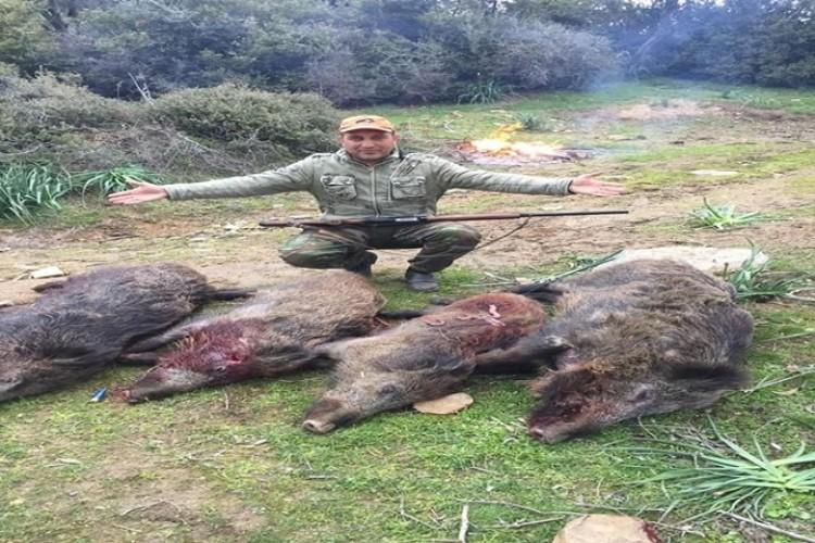 Aydın'da domuzlara karşı seferberlik ilan edildi