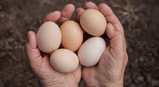 Yumurta anne sütünden sonra en kıymetli besin