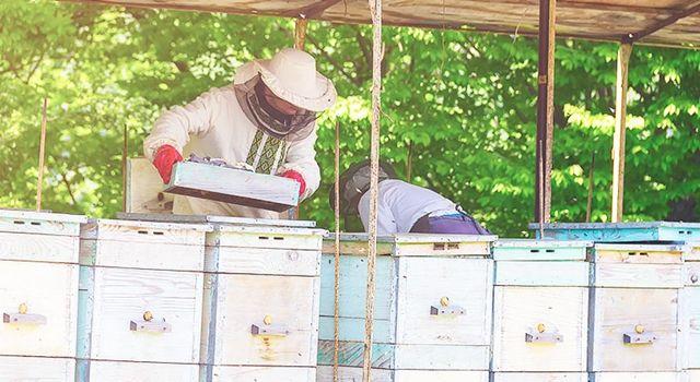 2020 Yılı Arılı Kovan ve Damızlık Ana Arı Desteğinin Şartları Değiştirildi ve Başvuru Süresi Uzatıldı