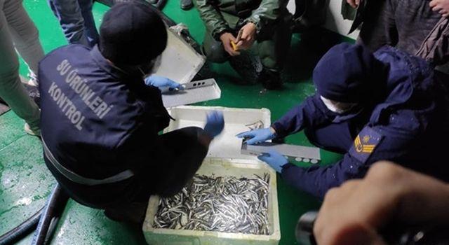Düzce'de 35 ton balığa el konuldu