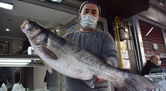 Karadeniz'de ağlara takılan 8 kilogramlık levrek 1040 liradan satışa sunuldu