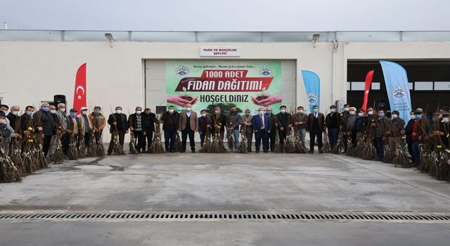Suluova Belediyesi'nden çiftçilere 1000 adet ceviz fidanı