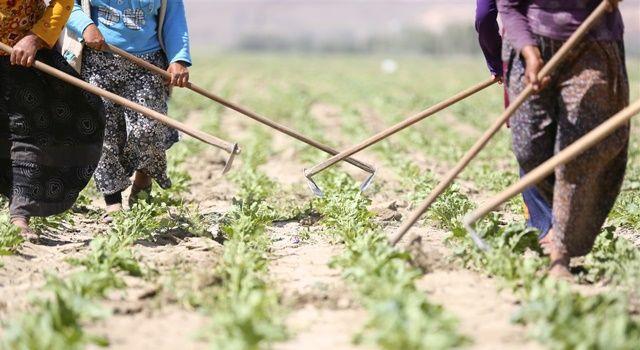 Tarım ÜFE yılın en yüksek değerine ulaştı