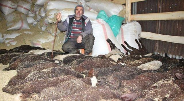 Bir gecede 95 kuzusu öldü