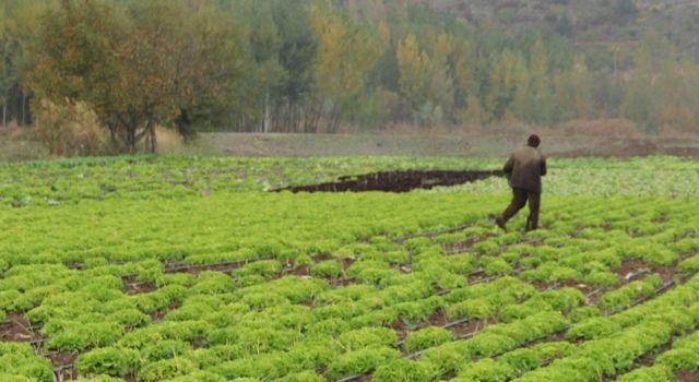 Çiftçinin enflasyonu yüzde 21,26 gerçekleşti