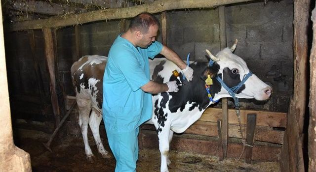 Aşılama yapılmazsa, riskler hayvanlar için ölümcül olabilmektedir