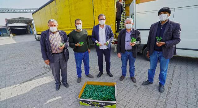 Büyükşehir'den Çiftçilere 2,5 Milyon Adet Biber Fidesi