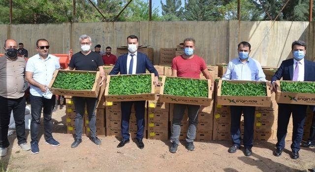 Çiftçilere Kapya Biber Fidesi ve Susam Tohumu Dağıtımı Yapıldı