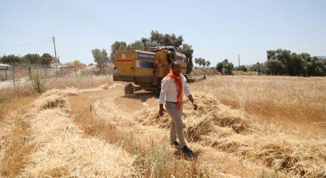 Ata Tohumu Karakılçık Buğdayının İlk Hasadı Karaova'da Yapıldı
