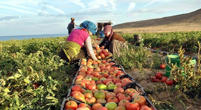 Tarım-ÜFE yıllık yüzde 20,2 arttı