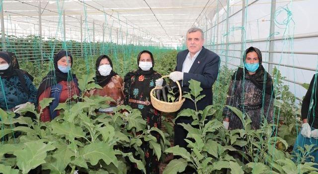 """""""Toplum Temelli Seracılık"""" Projesinde İlk Hasat Yapıldı"""