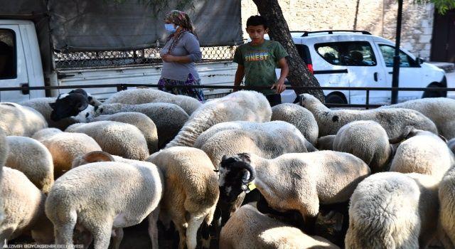 İzmir Büyükşehir Belediyesi'nin dağıttığı küçükbaş hayvan sayısı 12 bine ulaştı