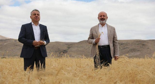 Kocasinan'da ata yadigarı ve 28 kromozomlu gacer buğdayının hasadı yapıldı