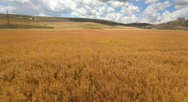 Tarım Krediden yemde ithalatı azaltacak girişim