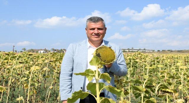 """Barut'tan ayçiçeği çağrısı """"Çiftçi mağduriyetini önlemek için ayçiçeği fiyatları açıklansın"""""""