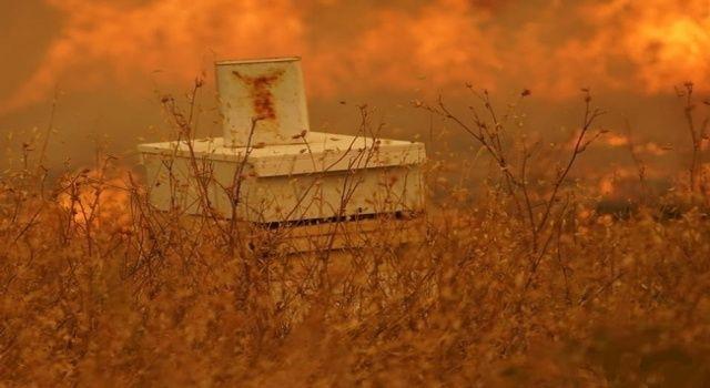 Ormanlarımızın yeniden yeşermesi için arıların geri dönmesi şart!