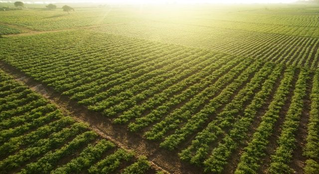 Tarım sektöründen 414 milyon dolarlık ihracat