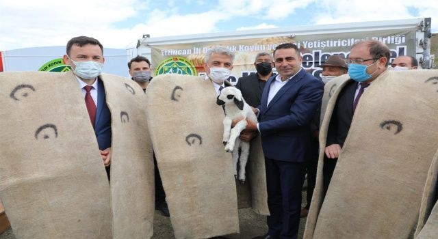 Erzincan'da İkinci Geleneksel Koç Katım Şenliği Düzenlendi