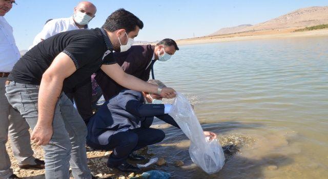 Kırkat Göletine Yavru Sazan Balığı Bırakıldı