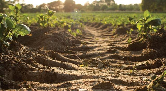 Kuraklıktan Zarar Gören Çiftçiye Destek Ödemesi