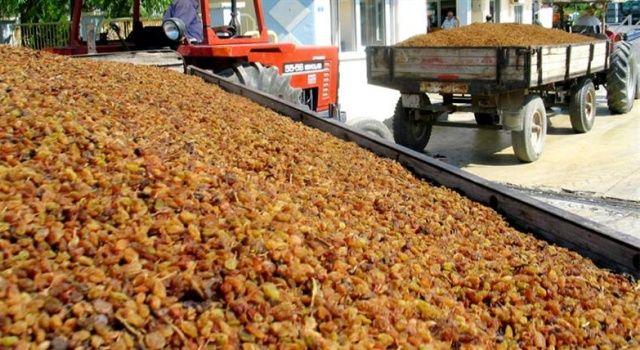 TMO: Kuru üzüm alım miktarı 50 bin tona ulaştı