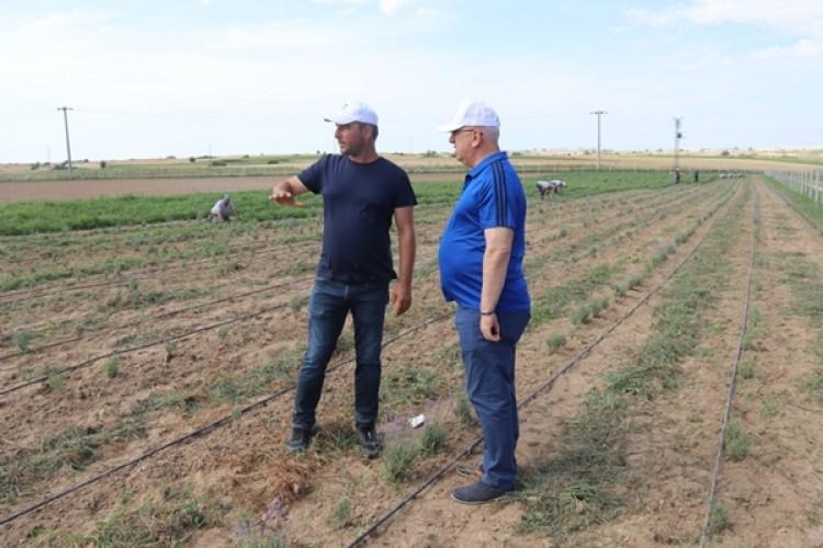 Yüksel: Tarım Arazilerimizdeki Ürünlerden Vatandaşlarımızı Yararlandıracağız