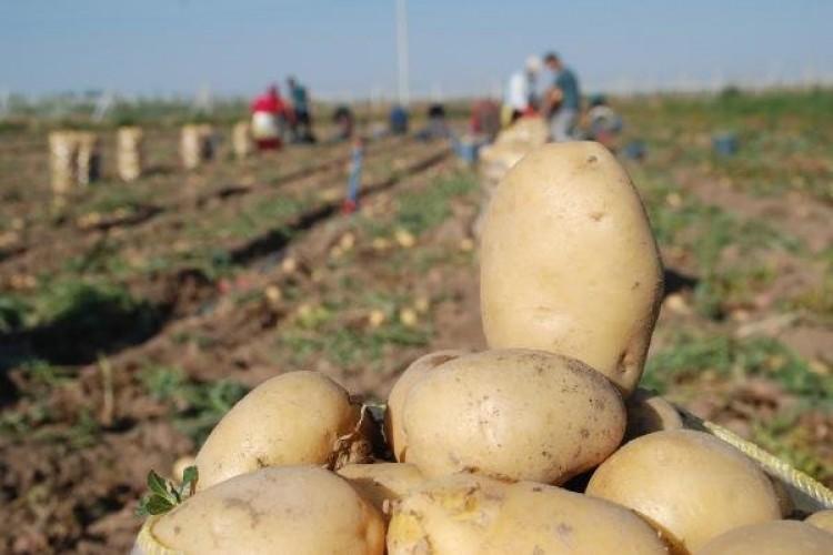 Patatesi Sattık İthale Düştük