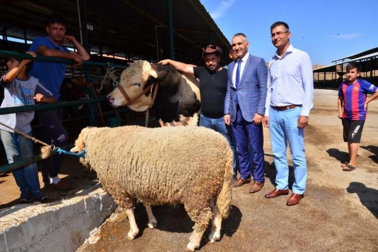 1100 kiloluk 'Kral'ı alana, 130 kiloluk koyun hediye