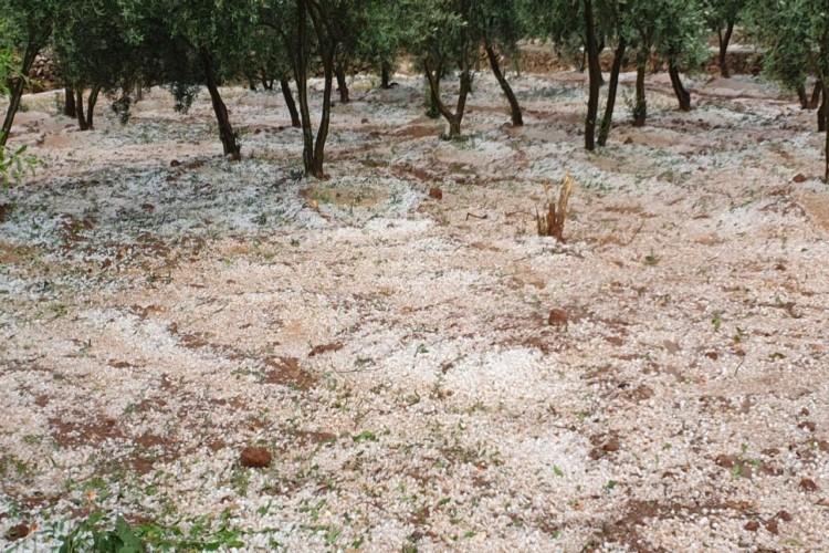 Şanlıurfa'da Etkili Olan Dolu Yağışı Zarar Çok Büyük