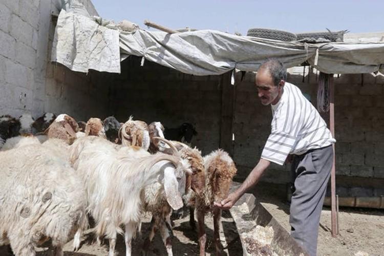 Suriye'de Tarımsal Üretimde Kayıp Var