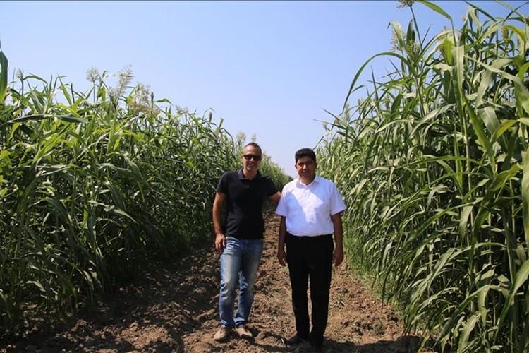 Türkiye'nin İlk Şeker Sorgumlarını Tescil Ettirdik