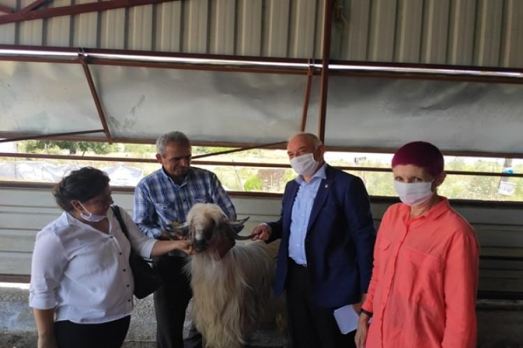 Paraguay Büyükelçisi Antalya'da Küçükbaş Hayvancılık İşletmesini Ziyaret Etti