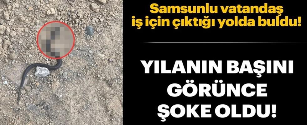 Samsun'da çift başlı yılan bulundu