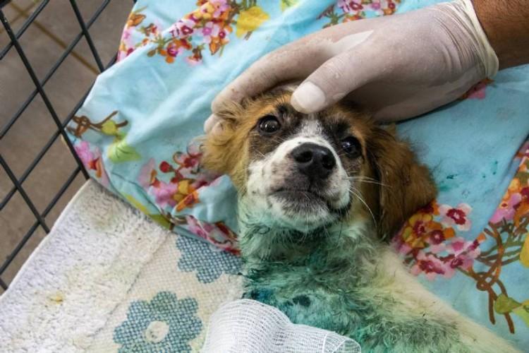 Büyükşehir'e son 7 ayda 1580 kedi ve köpek yaralanma ihbarı ulaştı