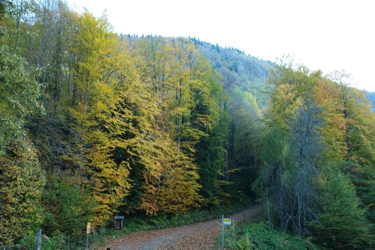 Batı Karadeniz'in gizli kalmış cenneti, ekoturizmin yeni merkezi yenice ormanları…