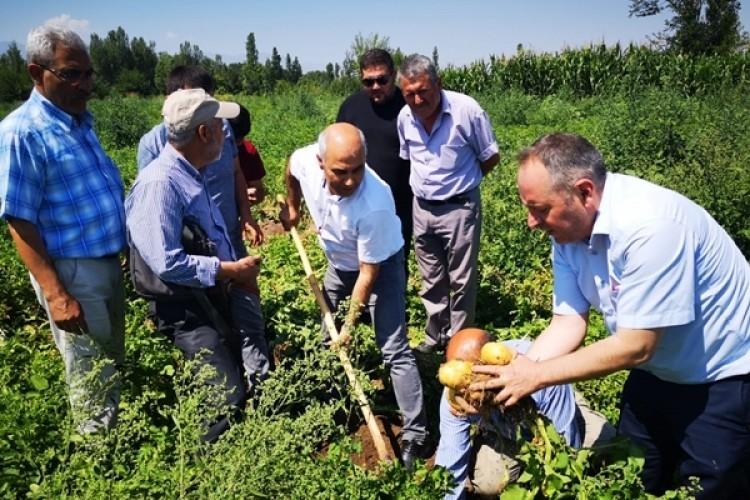 Iğdır'da Deneme Ekimi Yapılan Patates Hasat Edildi
